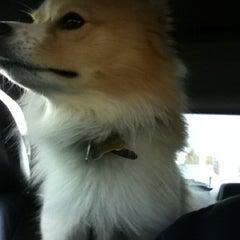 Photo taken at Granville Island Veterinary Hospital by Sean K. on 4/4/2012