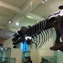 Photo taken at David H. Koch Dinosaur Wing by Kat B. on 6/5/2012