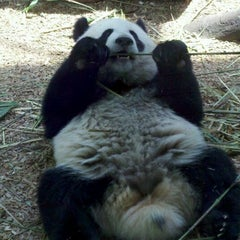 Photo taken at Zoo Atlanta by Scary S. on 5/4/2012