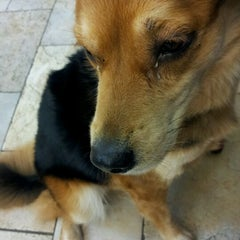 Photo taken at Chelmsford Animal Hospital by Joseph P. on 3/26/2012