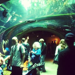 Photo taken at Steinhart Aquarium by Soowan J. on 8/25/2012
