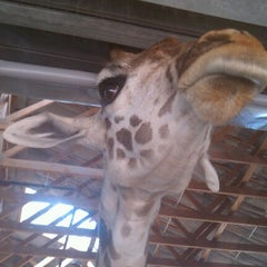 Photo taken at Houston Zoo by She _. on 6/24/2012