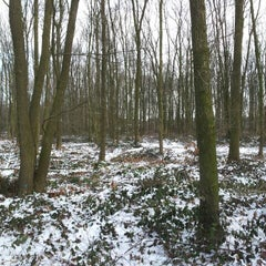 Photo taken at Vormerse Bos by Moermanology on 2/7/2012