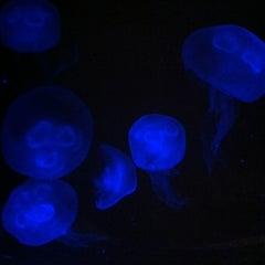 Photo taken at The Living Planet Aquarium by Tynan C. on 4/11/2012