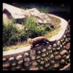 Photo taken at Parque de las Leyendas by Roberto Q. on 6/30/2012