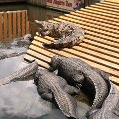 Photo taken at Gatorland by Kate H. on 3/22/2012