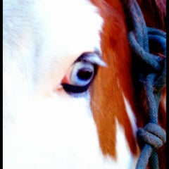 Photo taken at Sunrise Stables Equine Rescue by Brook H. on 4/26/2012