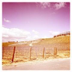 Photo taken at Cougar Vineyard & Winery by Allison N. on 4/1/2012