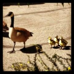 Photo taken at Denver Zoo by Adam M. on 4/29/2012