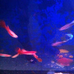 Photo taken at Aquarium 319 by Andree S. on 5/19/2012