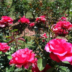 Photo taken at Raleigh Rose Garden by Lysandra on 6/9/2012