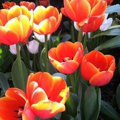 Photo taken at Lewis Ginter Botanical Garden by Jody L. on 3/30/2012