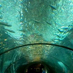 Photo taken at Oregon Coast Aquarium by Kyle K. on 5/15/2012