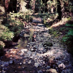 Photo taken at Muir Woods National Monument by Brian T. on 7/8/2012