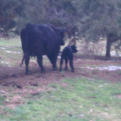 Photo taken at Creekside Angus by Stephen N. on 2/22/2012
