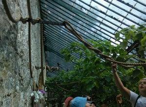 Сад Тропических Бабочек