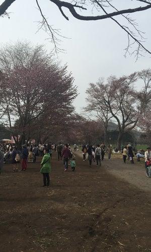 Shizunai Sakura Festival