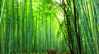 Photo of Trail 竹林の小径 (Kitasaga Bamboo Grove) at 右京区嵯峨小倉山田淵山町, 京都市 616-8394, Japan