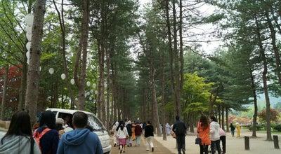 Photo of Trail 남이섬 메타세쿼이아길 at 남산면 남이섬길 1, 춘천시 24464, South Korea