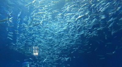 Photo of Water Park Acquatica - Marine Life Habitat at Manila Ocean Park, Manila, Philippines
