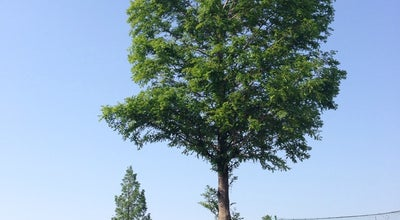 Photo of Baseball Field 追波川運動公園 at Japan