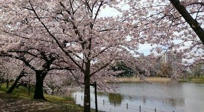 Photo of Lake 府大池 at 中区学園町1-1, Sakai 599-8531, Japan