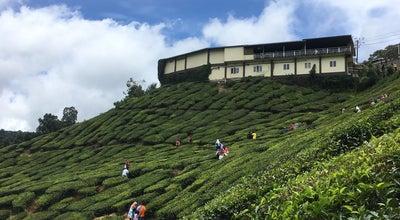 Photo of Tea Room Tea Farm Cameron Highlan at Cameron Highland, Malaysia