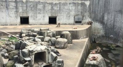 Photo of Zoo 岡崎市東公園動物園 at 欠町字大山田1番地, 岡崎市 444-0011, Japan