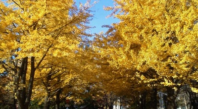 Photo of Trail 北海道大学 イチョウ並木 at 北13条西5丁目, 札幌市, Japan
