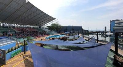 Photo of Water Park Acquatica - Sea Lion Show at Manila Ocean Park, Manila, Philippines