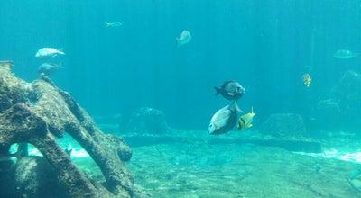 Photo of Aquarium Atlantis Marine Habitat at Bahamas