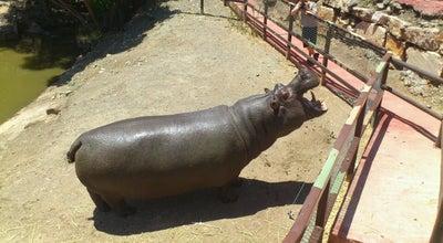 Photo of Zoo Selwo Aventura at A7- Autovía Costa Del Sol, Salida Km 162,5, Estepona 29680, Spain