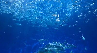 Photo of Arts and Entertainment Oceanarium@Oceanpark at Philippines