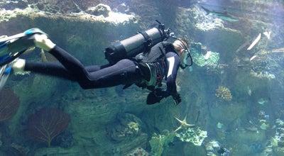 Photo of Aquarium Аквариум at Трк Мегагринн, 1 Этаж, Белгород, Russia