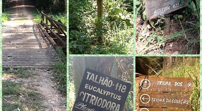Photo of Trail Trilha dos 9 kms - Horto Florestal at Brazil