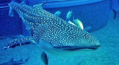 Photo of Aquarium 海遊館 (Osaka Aquarium Kaiyūkan) at 港区海岸通1-1-10, 大阪市 552-0022, Japan