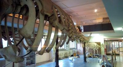 Photo of Tourist Attraction Museo di Zoologia at Via Francesco Selmi 3, Bologna 40126, Italy