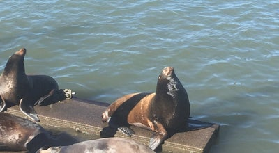 Photo of Pier Sea Lion Dock at Leif Erikson Dr, Astoria, OR, United States