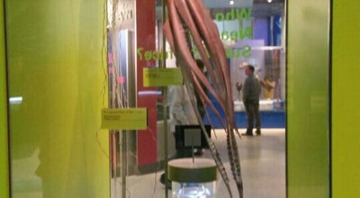Photo of Museum Giant Squid Exhibit at the Smithsonian at Washington, DC 20001, United States