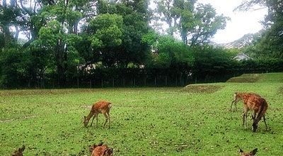 Photo of Park 奈良公園 (Nara Park) at 登大路町30, 奈良市 630-8213, Japan
