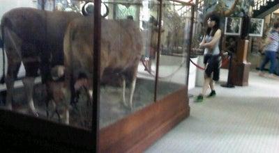 Photo of History Museum Sarawak Museum at Jln Tun Abang Hj. Openg, Kuching 93566, Malaysia