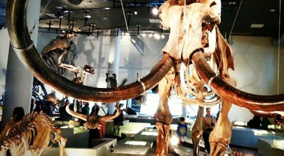 Photo of Science Museum Naturalis at Darwinweg 2, Leiden 2333 CR, Netherlands