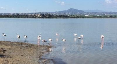 Photo of Trail Larnaca Salt Lake Walking Path at Larnaca Salt Lake, Larnaka, Cyprus