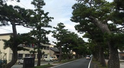 Photo of Trail 旧東海道松並木 at 西区舞阪町, 浜松市 431-0211, Japan