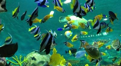 Photo of Aquarium 포스코센터 로비수족관 (POSCO Center Lobby Aquarium) at 강남구 테헤란로 440, 서울특별시 06194, South Korea