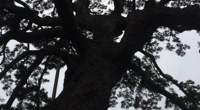 Photo of Temple 日蓮宗 大慶寺 at 藤枝4-2-7, 藤枝市 426-0025, Japan