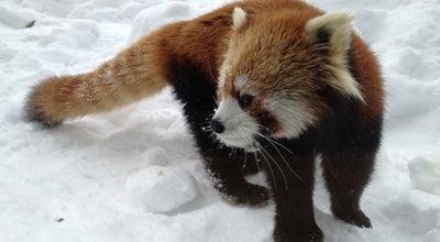 Photo of Zoo 円山動物園 at 中央区宮ケ丘3-1, 札幌市 064-0959, Japan