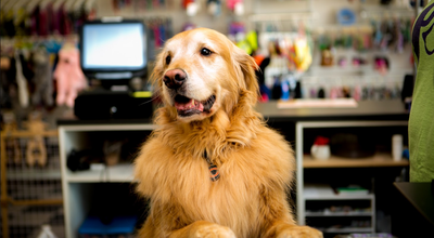 Photo of Pet Store Paw Lickin' Good at 2684 Dekalb Ave, DeKalb, IL 60178, United States