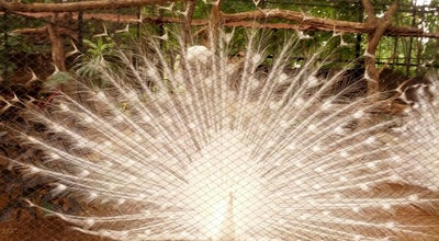 Photo of Arts and Entertainment Sri Chamarajendra Zoological Gardens - Mysore Zoo at Ittige Gudu, Mysor, India