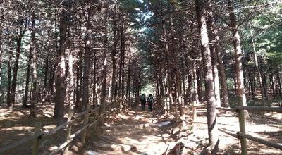 Photo of Trail 관악산 산림욕장 at 동안구 관양1동 1307-183, 안양시 431-061, South Korea